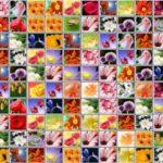 Цветы маджонг играть бесплатно онлайн